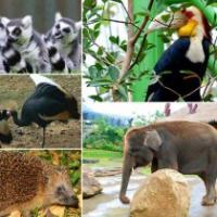 satwa gembiraloka zoo